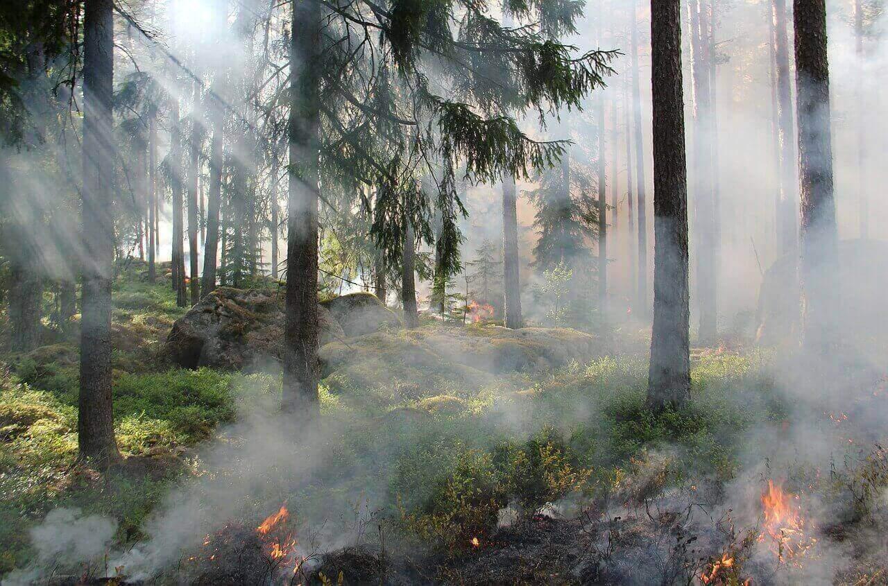 clima impazzito incendio boschi
