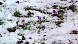 Meteo Marzo 2020: colpo di coda dell'INVERNO? Ecco la proiezione di ECMWF