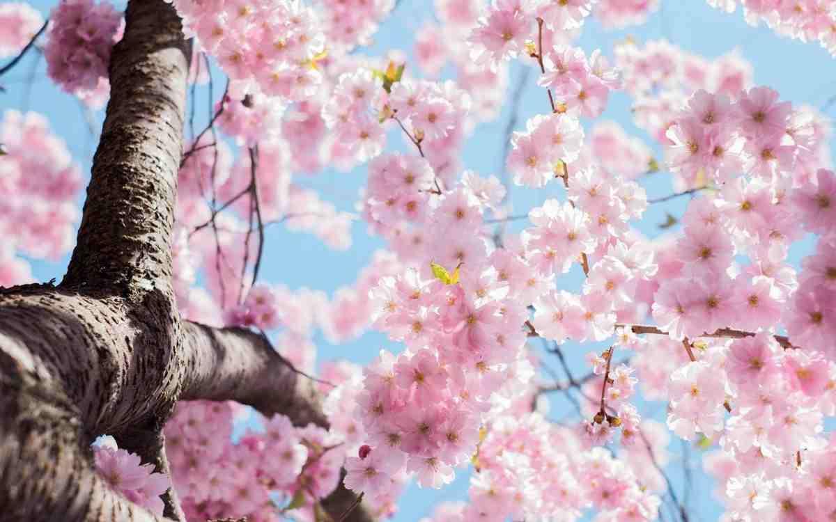 Meteo Ultimo Weekend di Marzo: Bel Tempo sull'Italia, sorprese a Pasqua