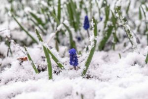 Meteo Prima Settimana di Aprile: Ritornano Freddo e Neve! Ecco i dettagli